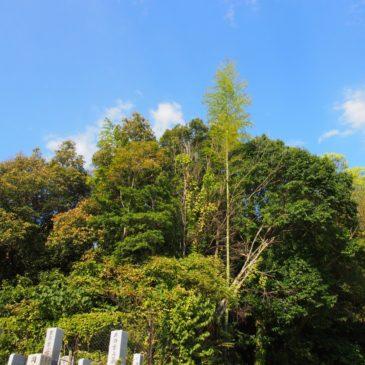 【不退寺裏山古墳】周辺からの眺めの良さが印象的な知られざる古墳