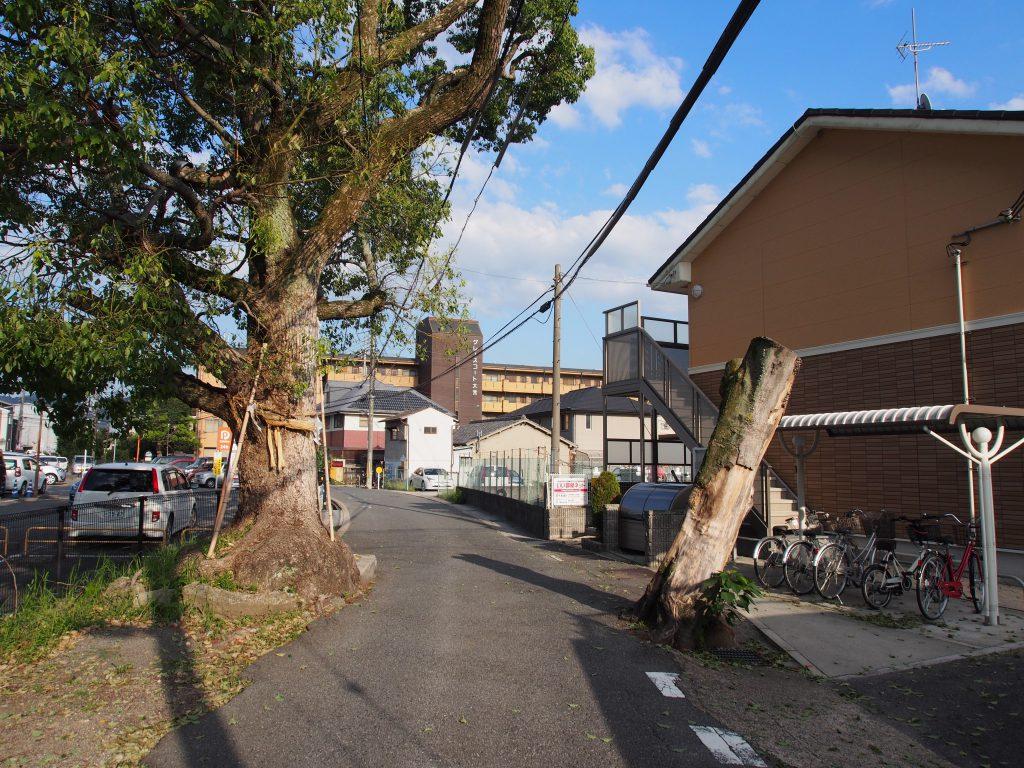 芝辻の野神さんの横を通過する細い道