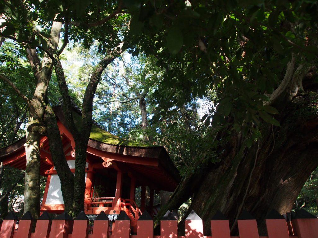 水谷神社を西側から望む