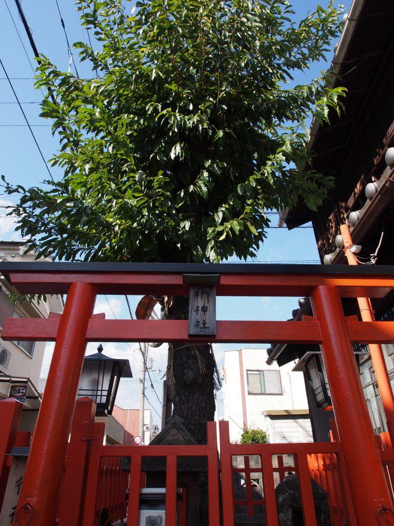 椚神社の「クヌギ」と鳥居