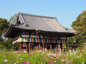 【般若寺本堂】コスモス畑に包まれたお堂の中には多数の仏像が安置される