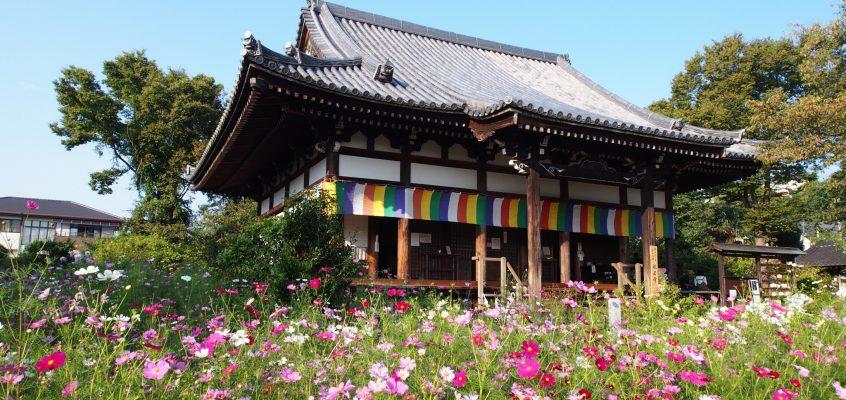 【一覧形式】奈良市内にある「花の名所」と「花の見頃」完全まとめ