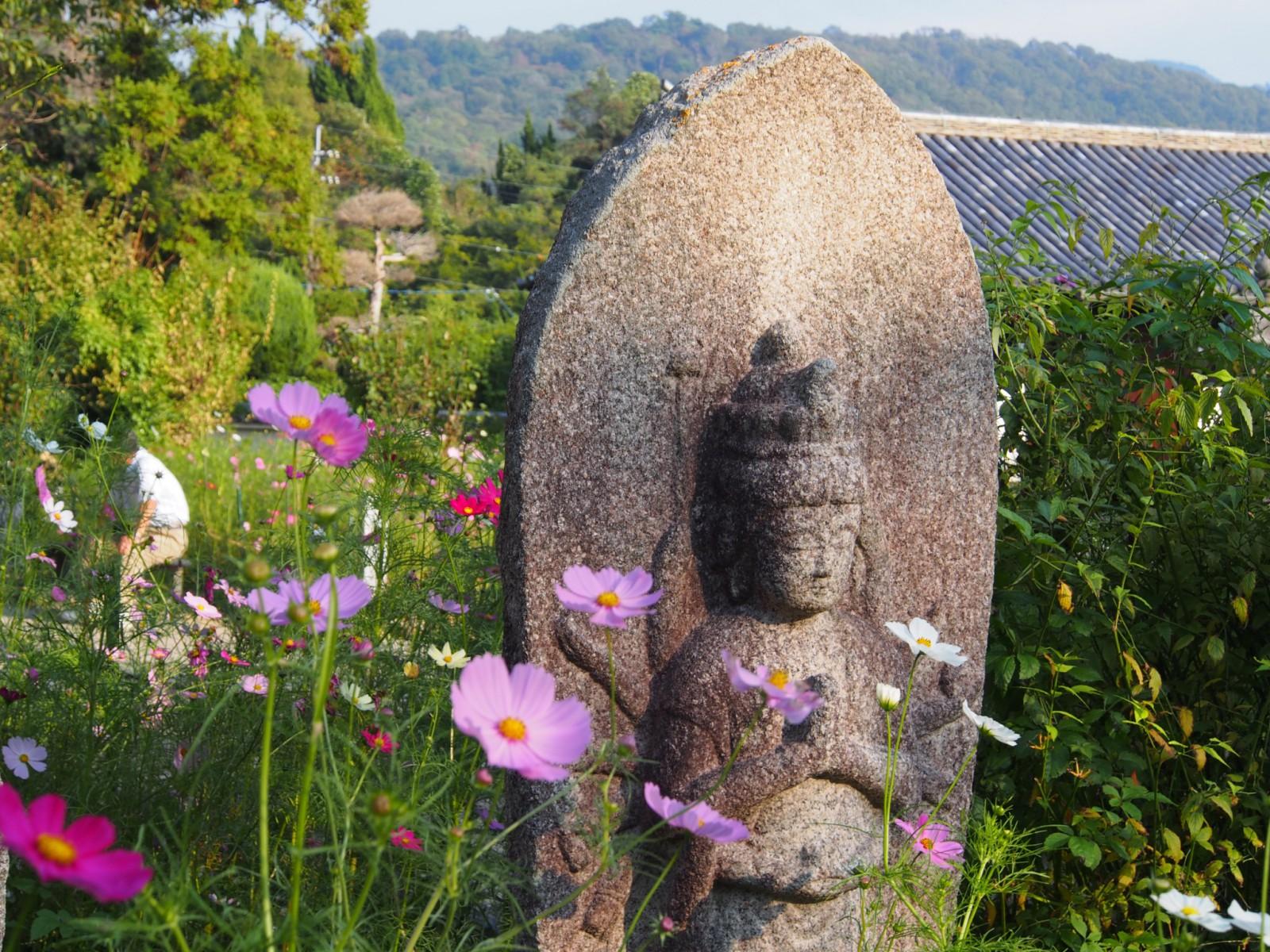 石仏とコスモス(般若寺)