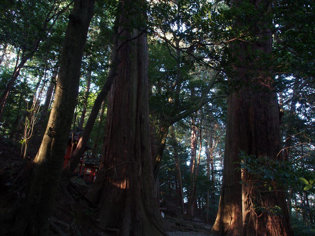 夜支布山口神社の鎮守の森