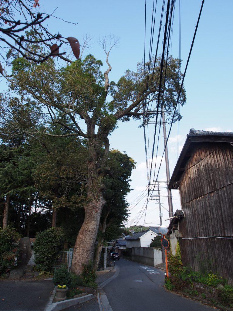 添御縣坐神社の鳥居前に建つ巨木