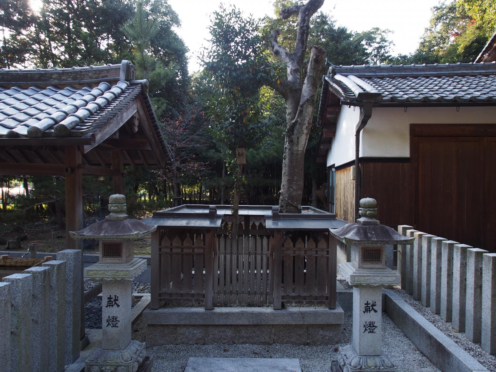 山上八幡神社のクスノキ