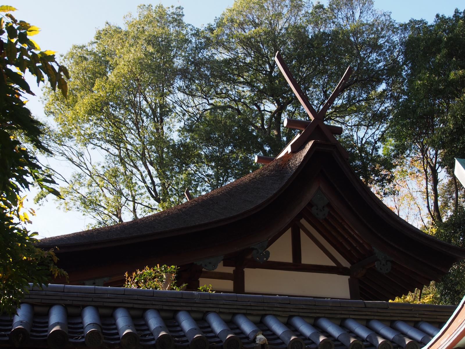 氷室神社本殿の檜皮葺屋根