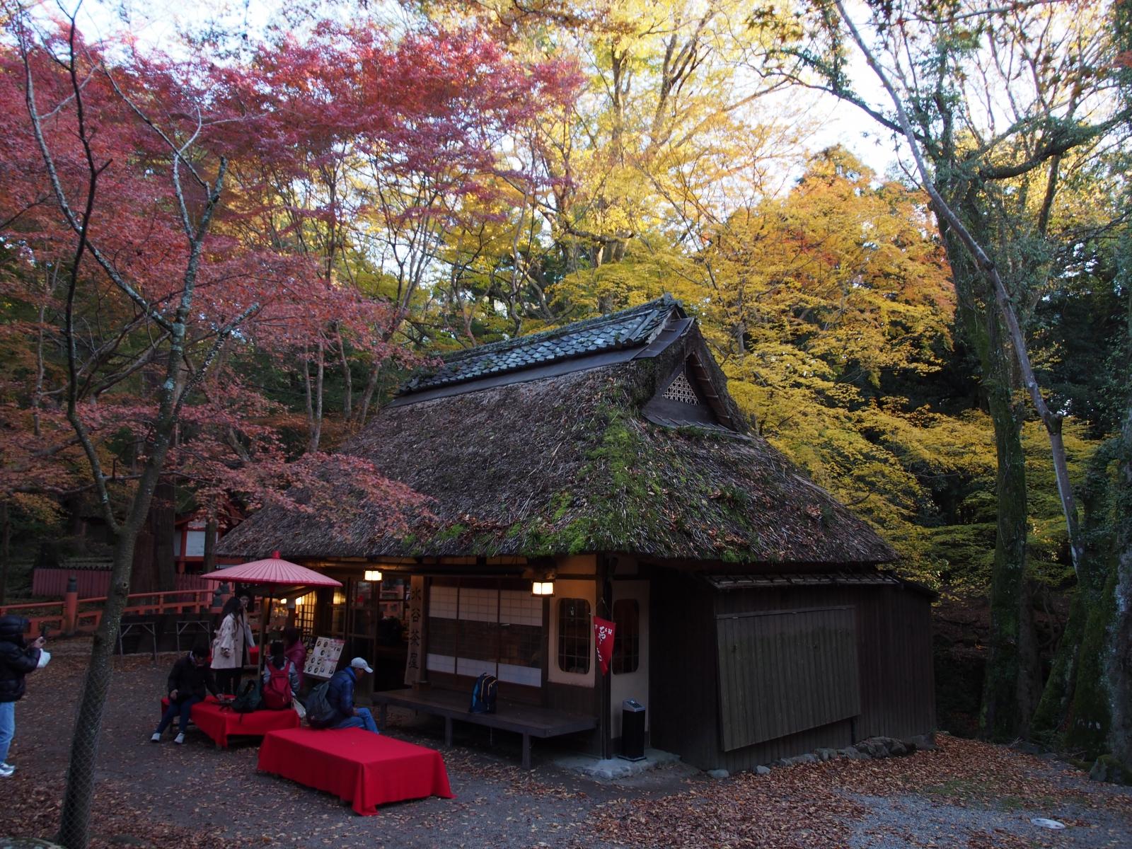 紅葉に包まれる水谷茶屋