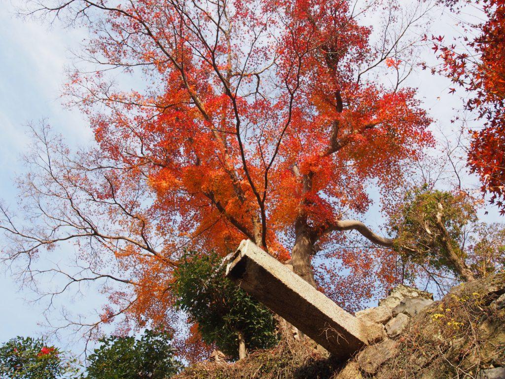 【龍王の滝】二月堂近くにある小さな小さな水の流れ