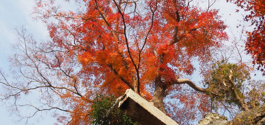 龍王の滝(東大寺)
