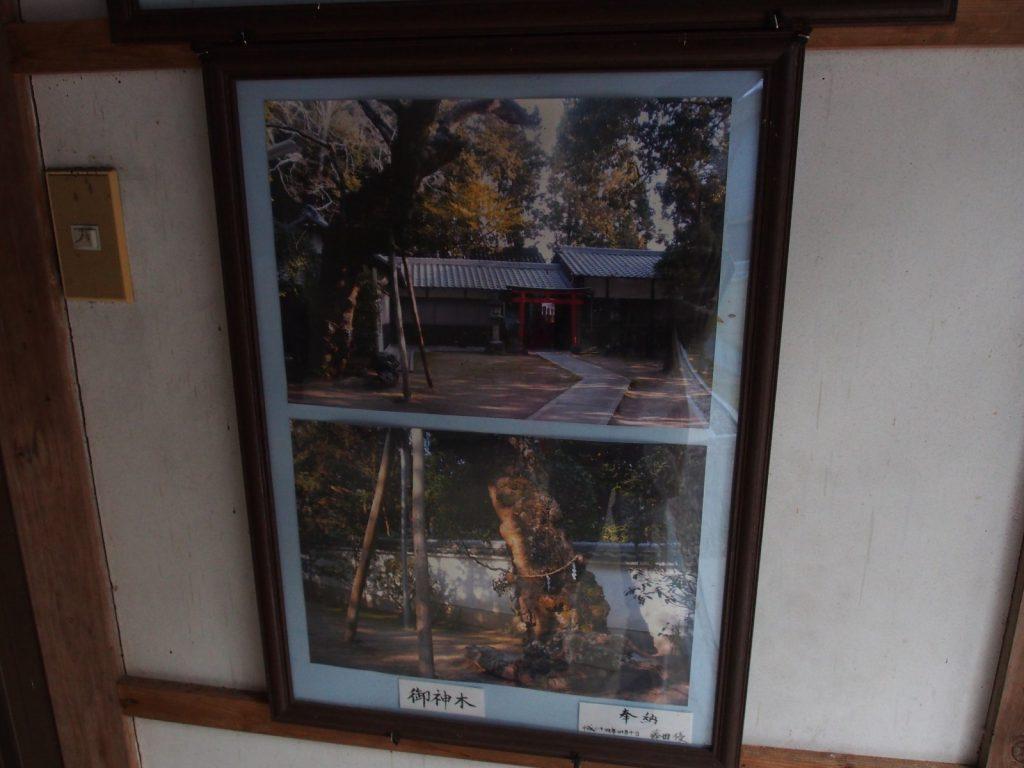釣殿神社のご神木
