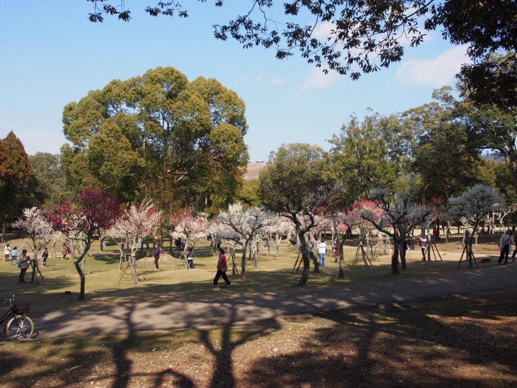 【浅茅ヶ原園地】「梅林」や「水辺」など様々な風景を味わえる奈良公園内随一の景勝地