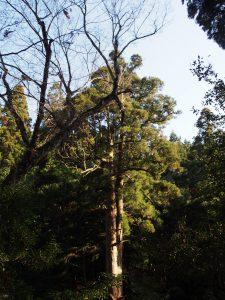 【春日山原始林・春日山遊歩道】市街地のすぐそばに広がる圧倒的な「自然」