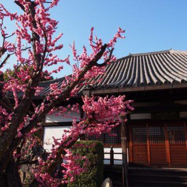 【霊巌院】開化天皇陵に隣接する位置にある「阿弥陀三尊石仏」が美しいお寺