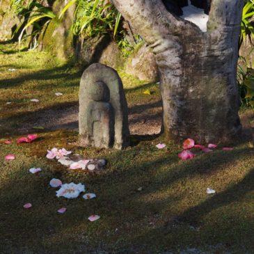 【白毫寺五色椿】美しい「散り椿」を味わえる「奈良三名椿」の一つ