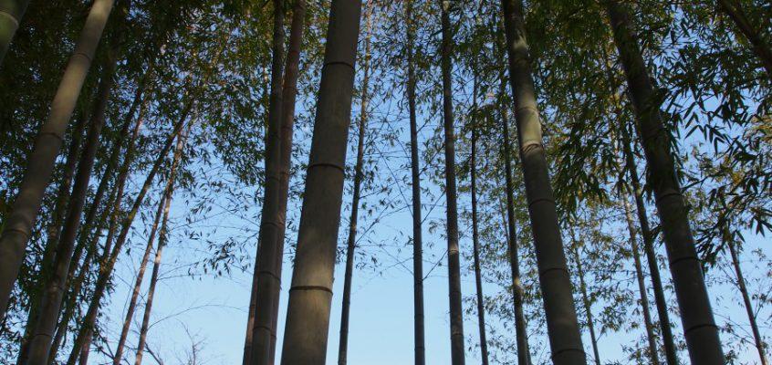 【大安寺の「竹林(いのちの小径)」】光仁天皇の生涯に思いをはせる涼やかな空間