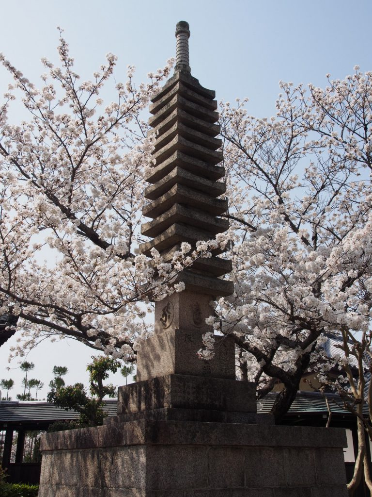 帯解寺の桜(十三重石塔)