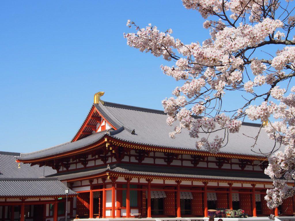 大講堂と桜の木