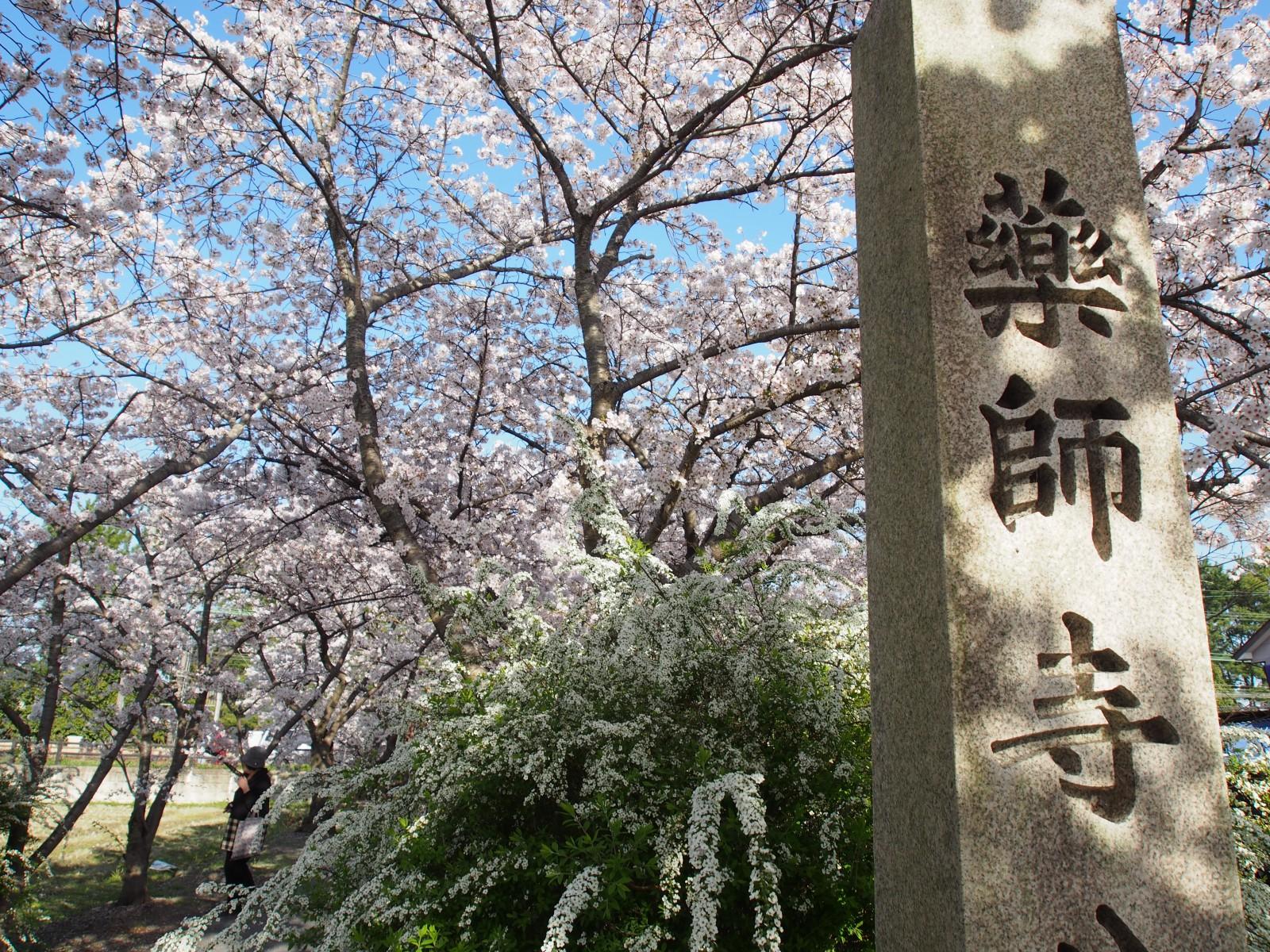 薬師寺休ヶ岡八幡宮への参道(桜のトンネル)