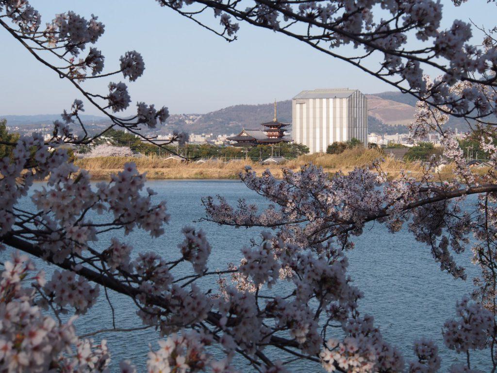 奈良医療センターの桜と薬師寺・若草山