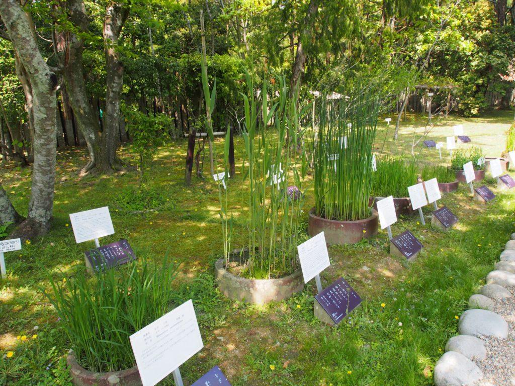 萬葉植物園で栽培されている「萬葉植物」
