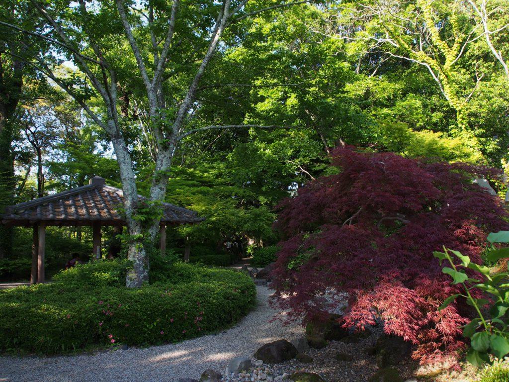 吉城園「茶花の庭」