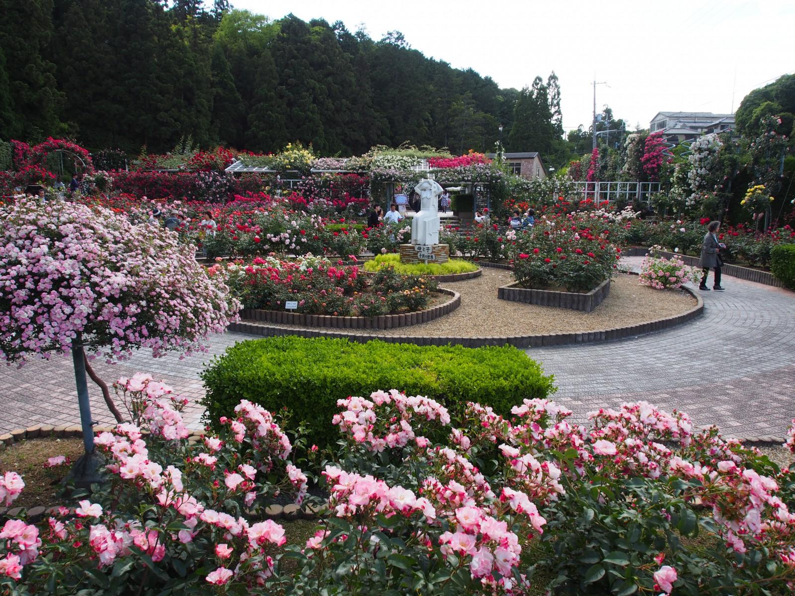 霊山寺「バラ庭園」
