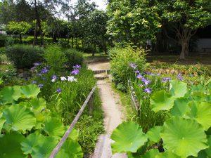 【法華寺華楽園】季節ごとに様々な草花をお楽しみ頂けるお寺の庭園