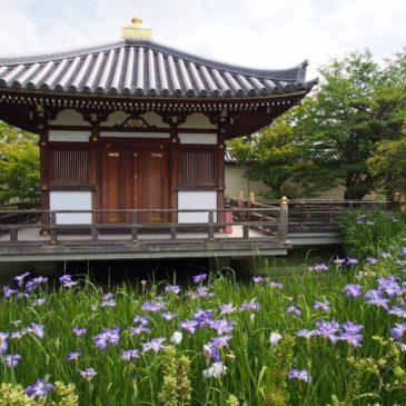 【法華寺護摩堂】真新しいお堂の周囲には美しい花しょうぶが咲き誇る
