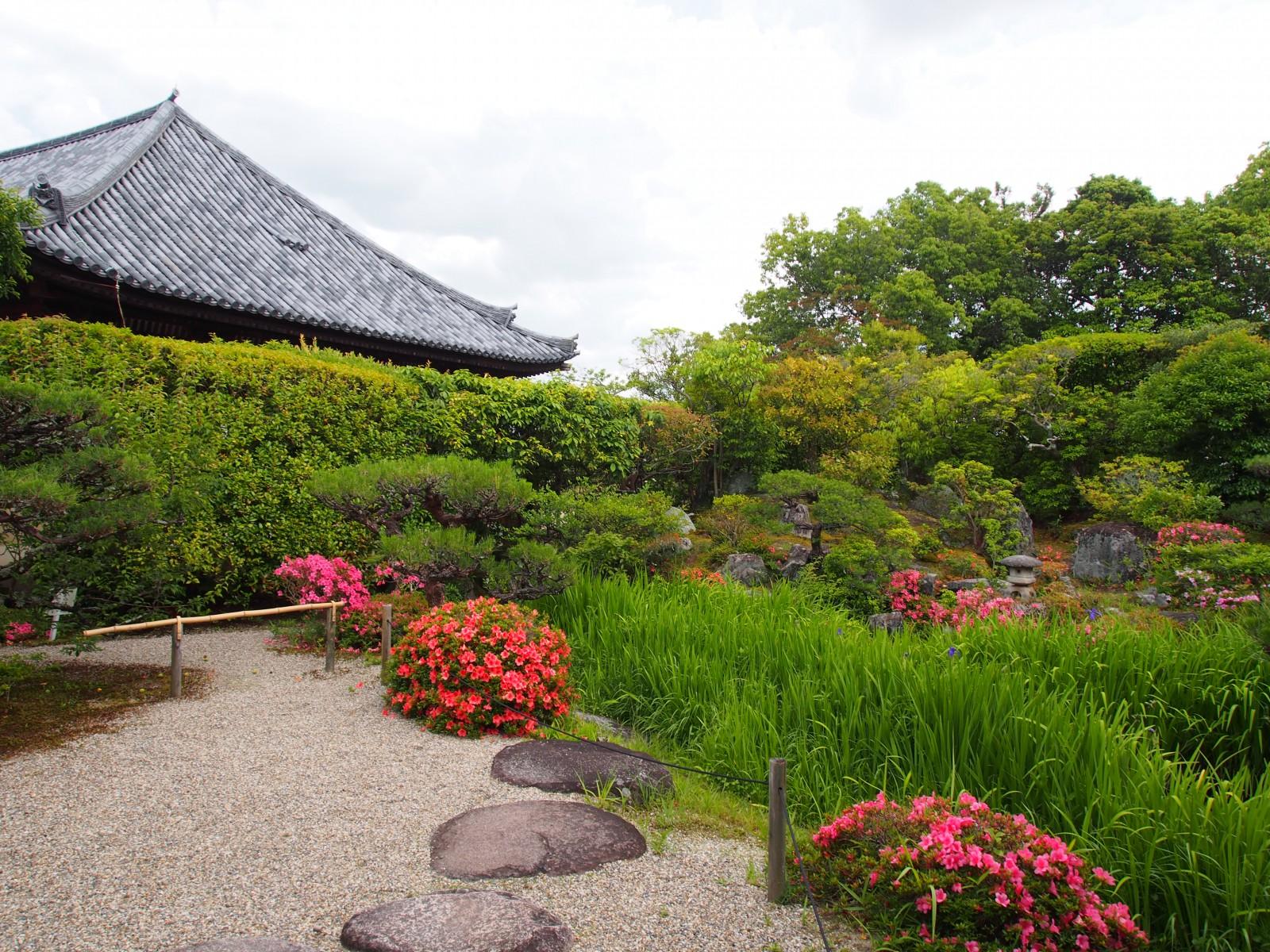 法華寺本堂と名勝庭園の杜若・皐月