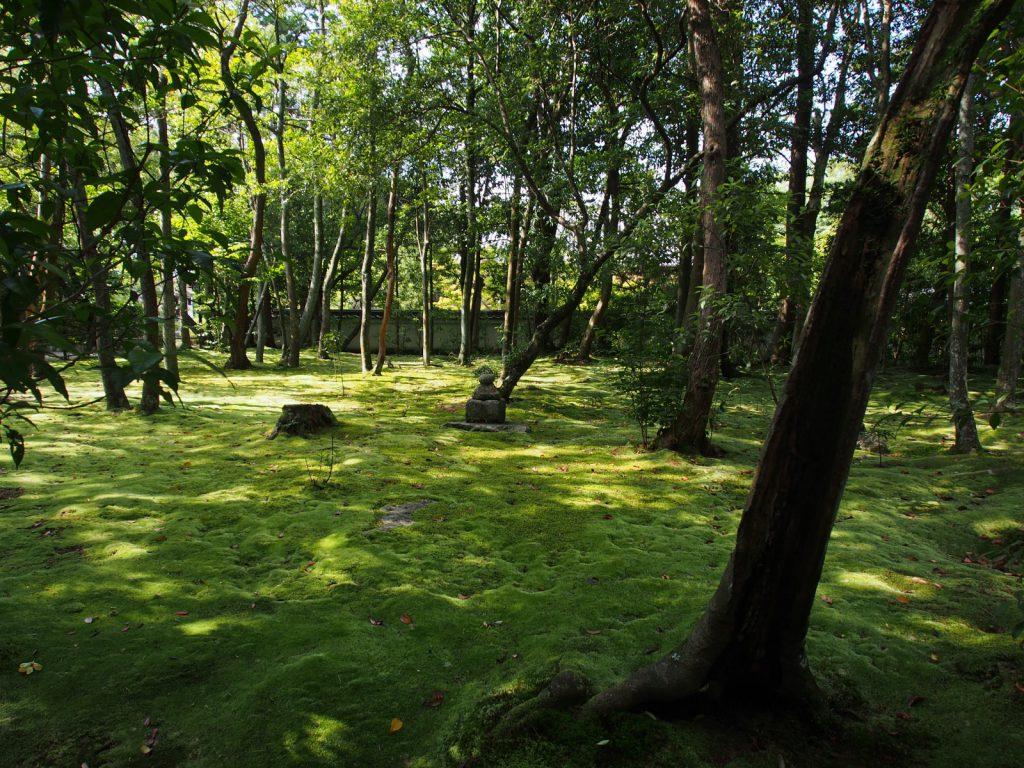 苔庭が美しい秋篠寺金堂跡
