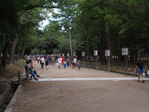 【春日大社表参道】自然あふれる参道は重要な神事の舞台にも