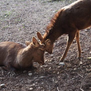 これはダメ!観光客の方が「奈良の鹿」に「してはいけないこと」まとめ