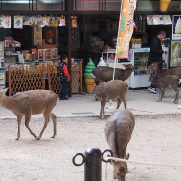 奈良名物「鹿せんべい」の原材料は?製造・販売の仕組みについて