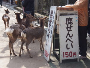 鹿せんべいの販売場所・買い方・料金は?年中購入可能です