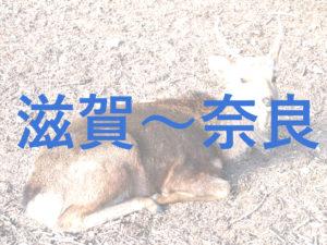 【大津】滋賀県内各地から奈良までの交通アクセスのまとめ【彦根】