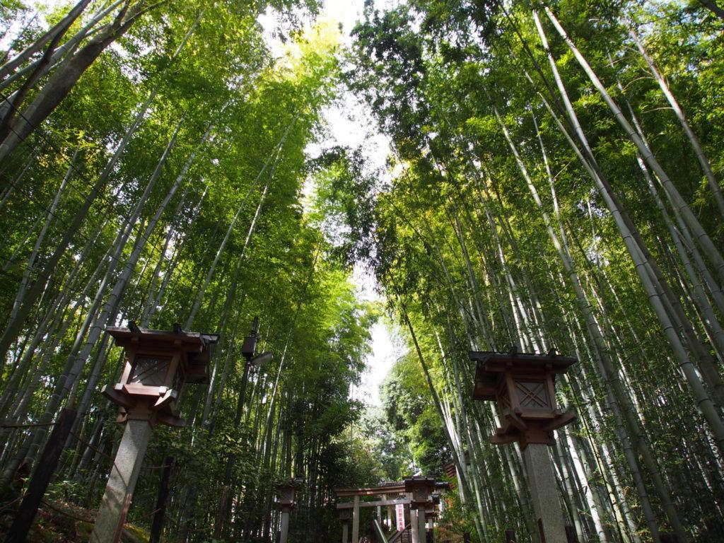 久延彦神社の「竹林」